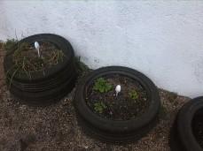 vida en los maceto neumáticos