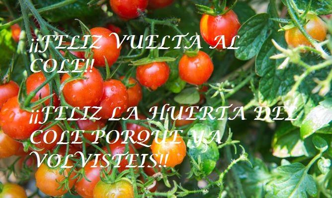 como-cultivar-tomates-cherry
