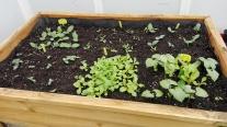 Evolución mesa de cultivo (I)
