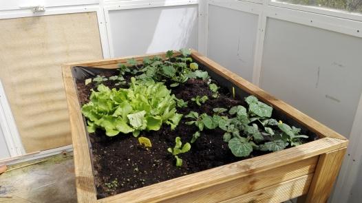 Evolución mesa de cultivo (II)
