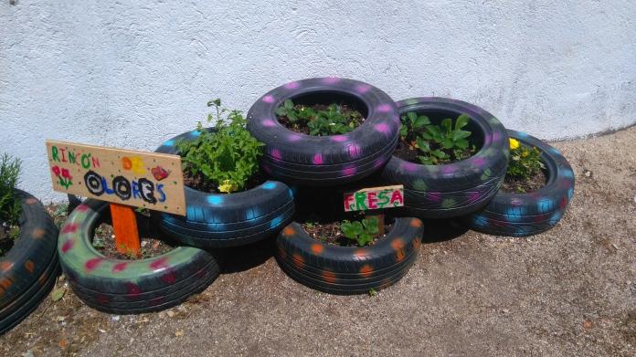maceto neumáticos