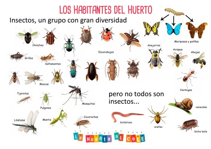 panel insectos del huerto